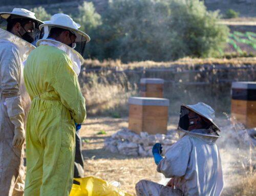 Las abejas: la comunidad más numerosa de Alma Carraovejas
