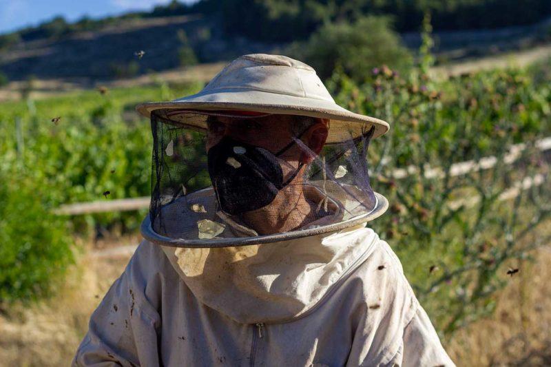 apicultor abejas