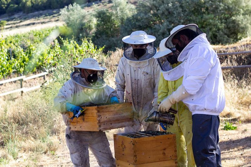 colmena abejas apicultor